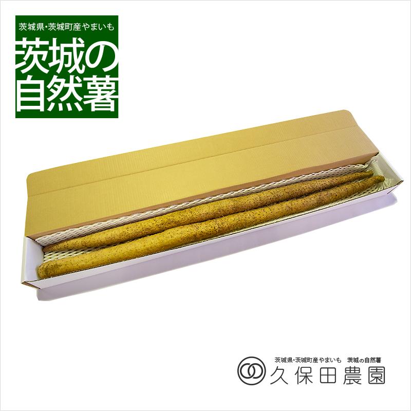 茨城の自然薯 2本 (約2kg/1m) 長箱