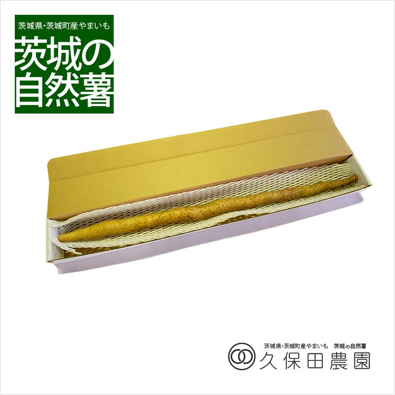 茨城の自然薯 1本 (約75g/85cm) 短箱